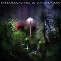 Emil Brandqvist Trio - Entering the Woods (2020)